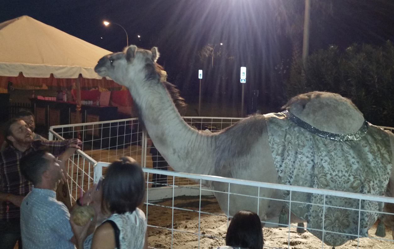 Wm. Grant party featured an Arabian Nights theme complete with sand, Bedouin tents and a very sociable camel.